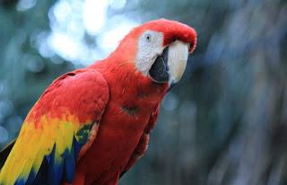 Contoh Cerita Anekdot Lucu  Yang Berjudul Burung Beo Nakal