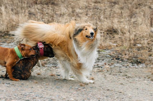 arkea koiran kanssa