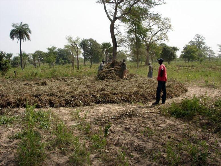 Appauvrissement des sols agricoles