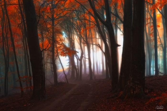 Осенние пейзажи. Janek Sedlar (фотограф)