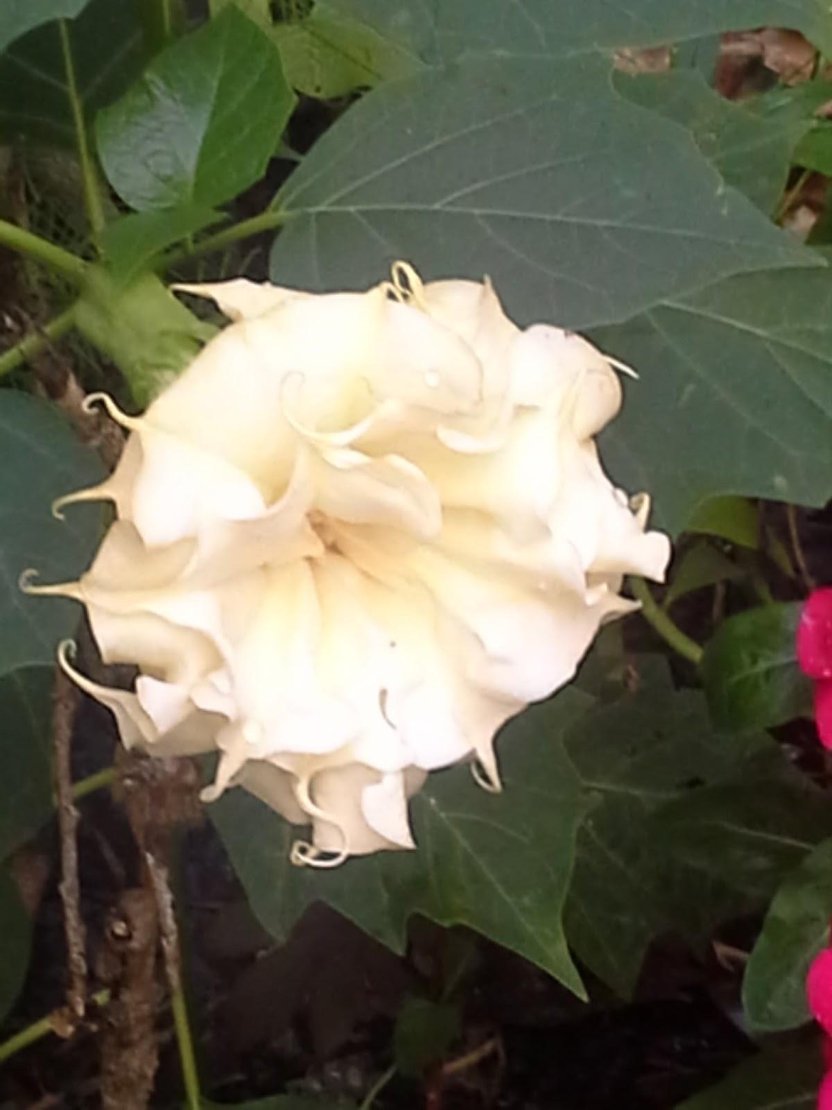 the consummate gardener florida gardening and more garden diary