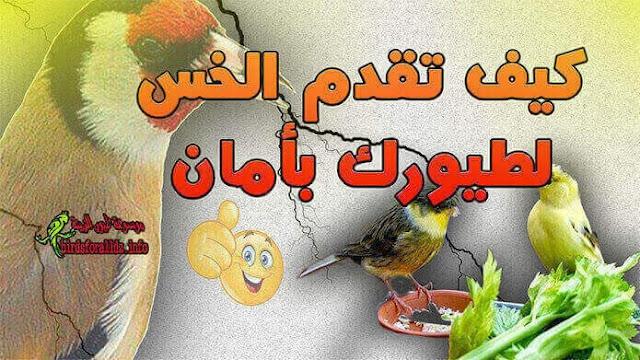 ابسط طريقة لتقديم الخس لجميع الطيور