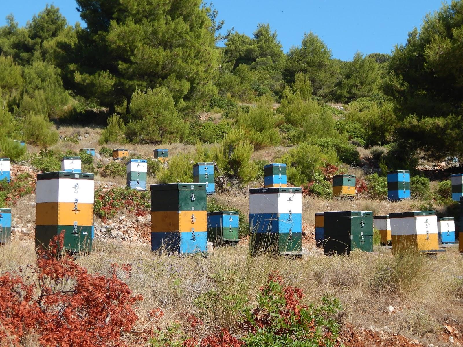 včelařství v Řecku