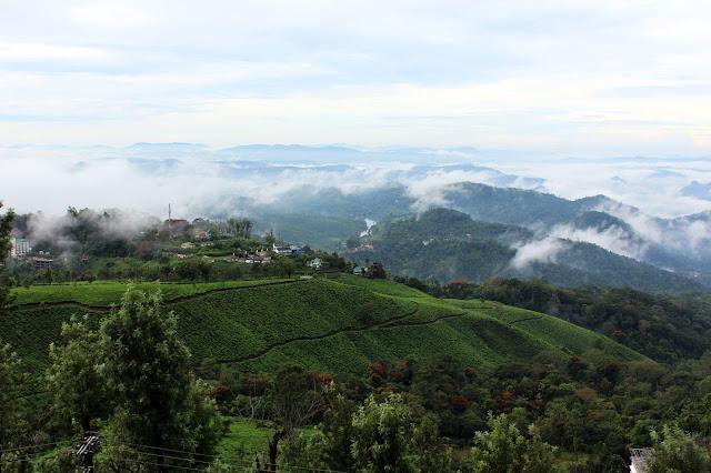 View, Misty, Mountain, Tea, Garden, Munnar, kerala