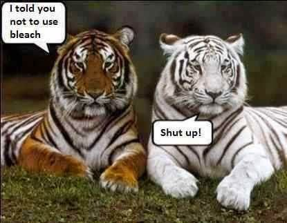 Funny White Tiger Bleach Meme Joke Picture
