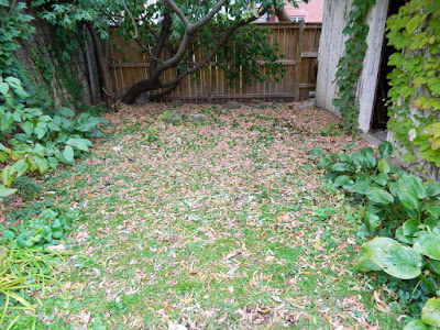 Yonge and Lawrence Backyard Toronto Fall Cleanup before by Paul Jung Gardening Services--a Toronto Gardening Company