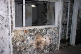 Black Mold Removal Fresno