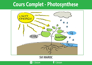 [Sites] : La photosynthese - cours complet