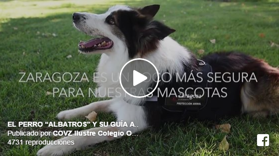 perro-detecta-veneno-parques