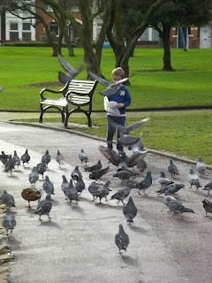 feeding the ducks and pigeons with breadcrumbs