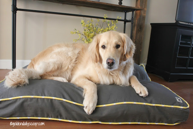modern and fashionable dog beds by molly mutt