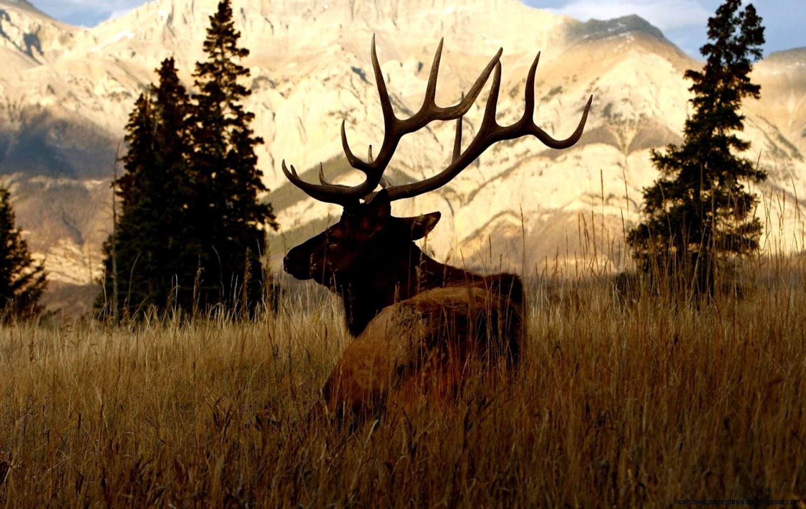 Deer Animals Nature Hd Wallpaper | Free High Definition Wallpapers
