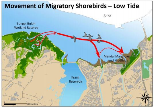 Both the mudflat and the wetland reserve are ecologically inter-dependent habitats for shorebirds.