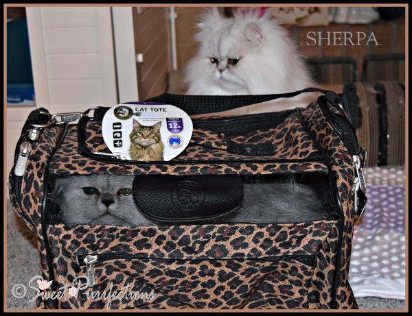 Truffle inside Sherpa™ Cat Tote