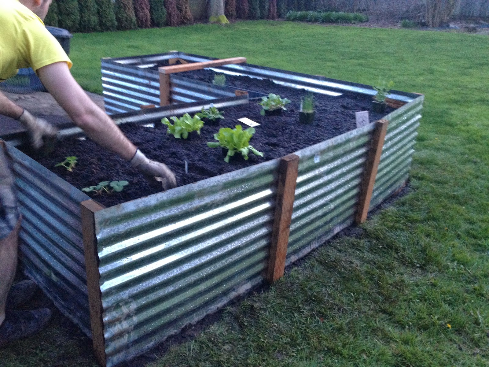 Corrugated Steel Raised Garden Bed Home Design