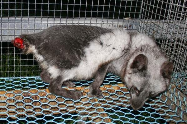 How Are Dogs Treated In Finland