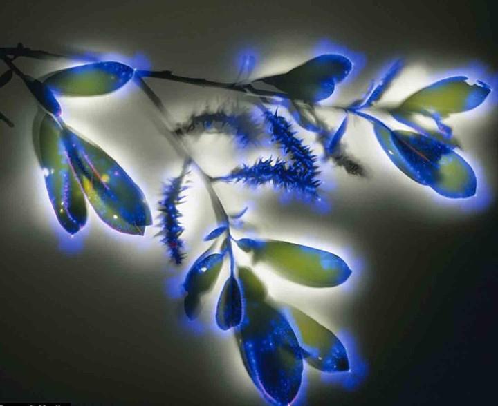 Robert Buelteman. Электрические цветы 3