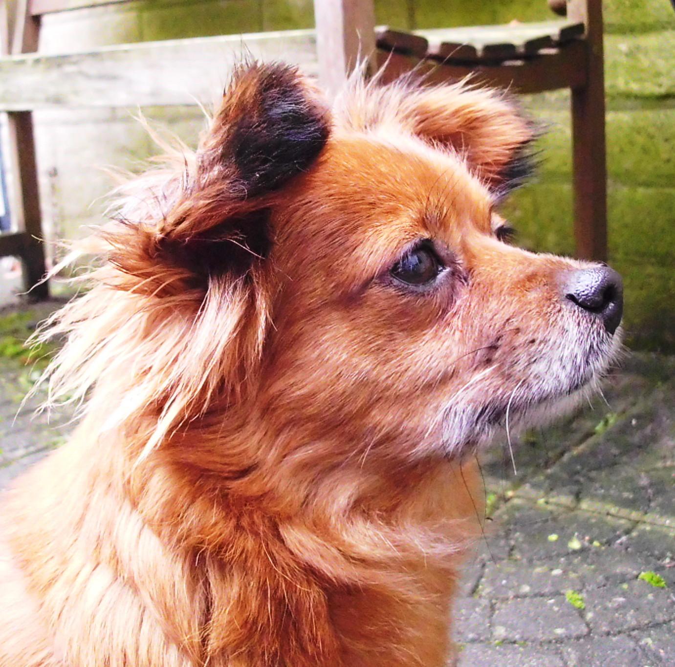 Welp Sunshine and Shadow: Weer een hondje ! PW-52