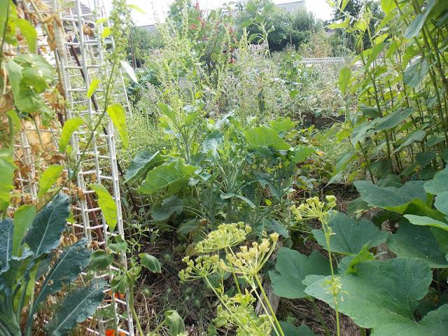 Quelques vues de mon jardin en permaculture, 25 juillet 2017