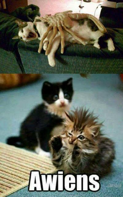 alien cat meme, funny cat, cat meme, funny cat meme