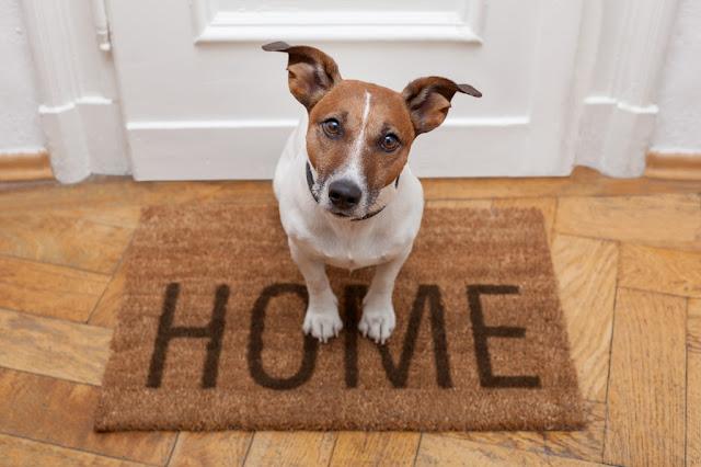 house-training-a-dog