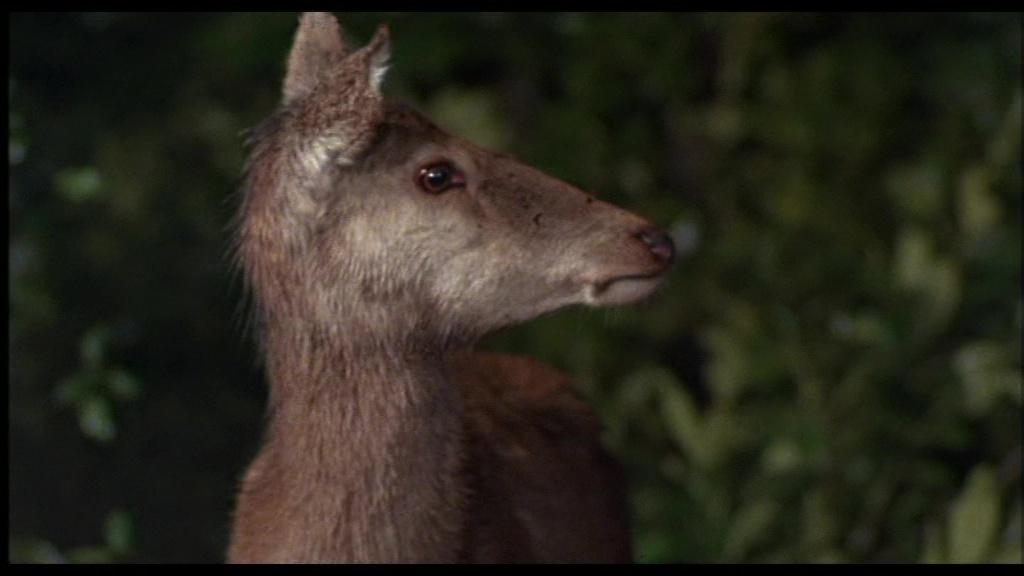 Loup-garou porno comique