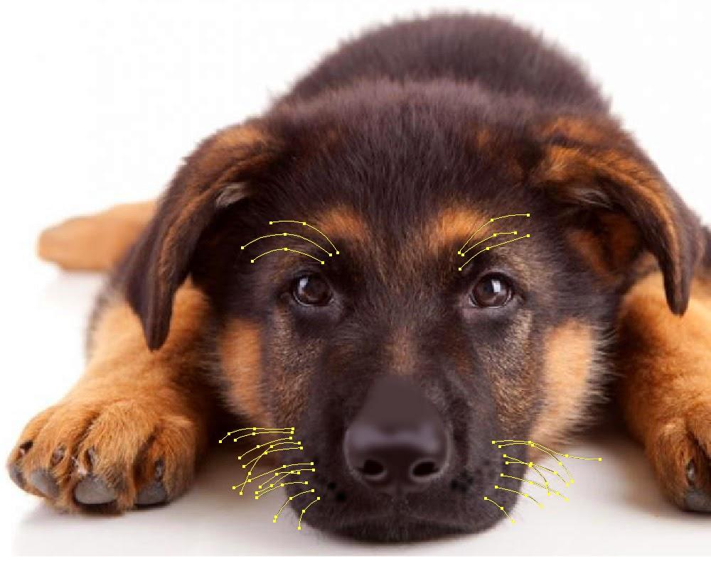 adorable des photos de aspirateur pour poil de chien. Black Bedroom Furniture Sets. Home Design Ideas