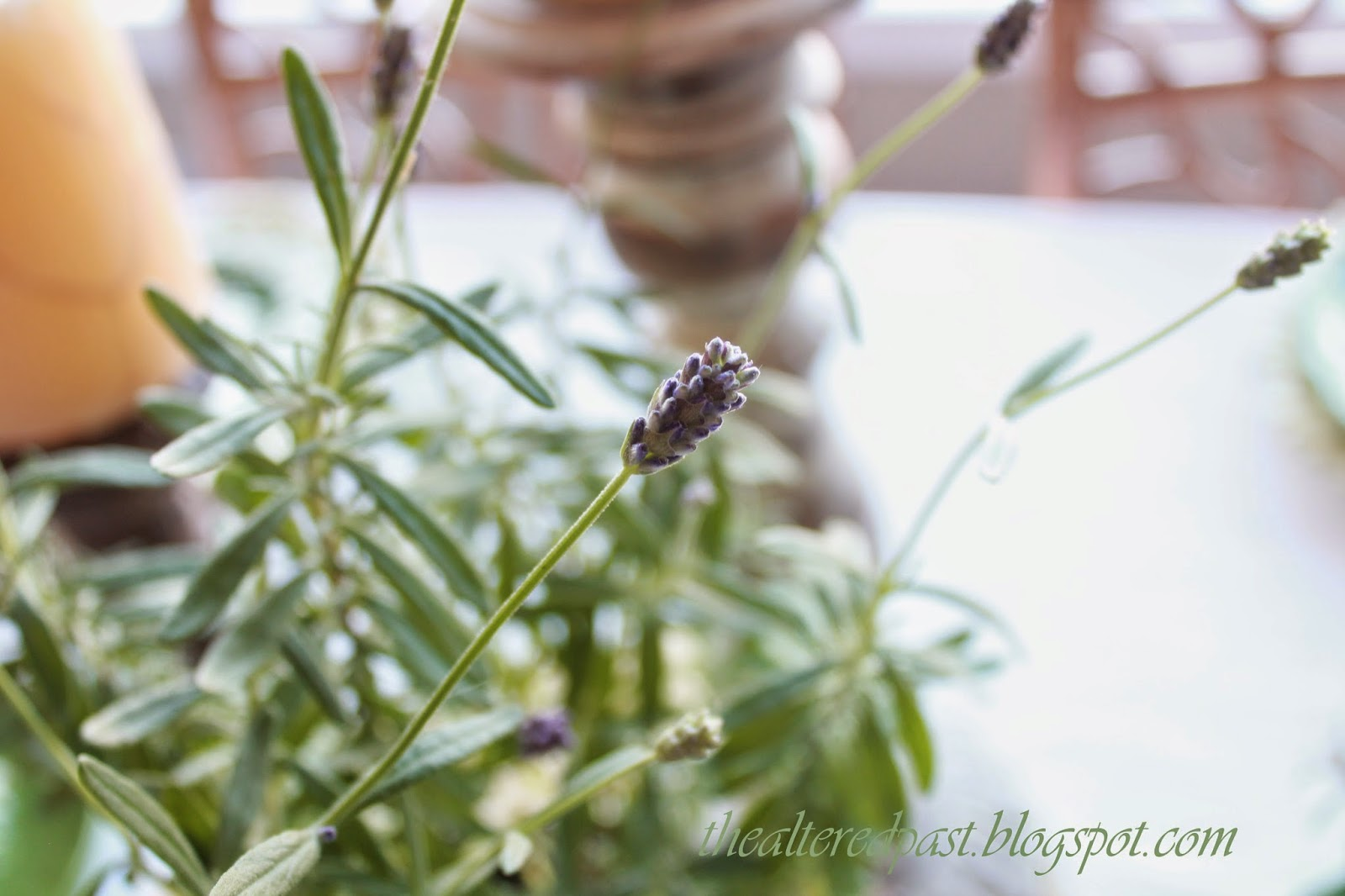 fresh lavender on tablescape
