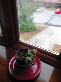 plant, window