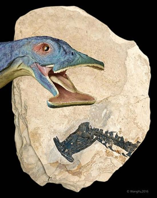 Atopodentatus unicus - imagem 2.jpg