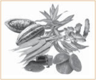 Macam-Macam Pewarna Alami yaitu buah kakao, daun suji, kunyit, wortel, cabai merah, dan gula merah