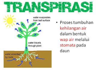 Proses Transpirasi