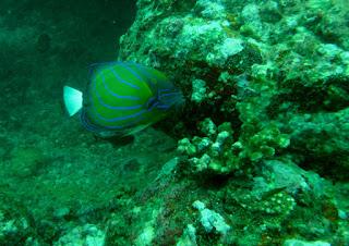 Rental ELF Scuba Diving di Pelabuhan Ratu
