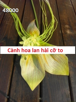 Phu kien hoa pha le o Mỹ Dinh 1