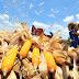 San Miguel bumili ng 69M kilo na mais mula sa mga naghihirap na magsasaka dahil sa lockdowns