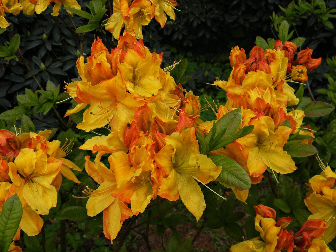 kwiaty, Kórnik, zwiedzanie, przyroda, wiosenne kwiaty