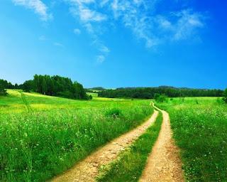 летняя дорога окружённая зарослями и уходящая в даль