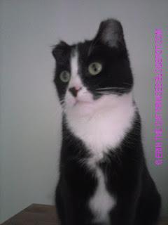 © ERIN THE CAT PRINCESS.BLOGSPOT.COM