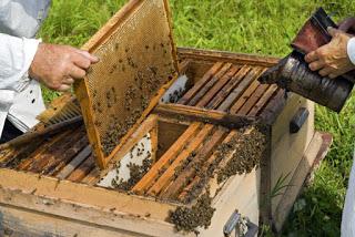 Προστασία της παραγωγής του μελιού ζητούν οι μελισσοκόμοι της Καλύμνου