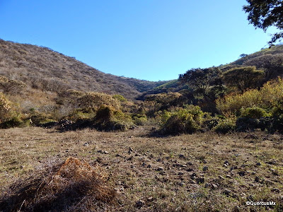 La barranca del Cerro Patomo