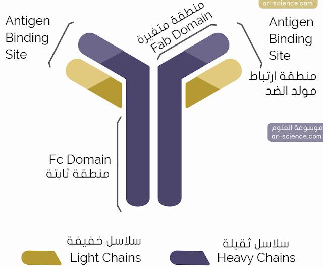 تركيب الأجسام المضادة : مكونات الأجسام المضادة ، تركيبة