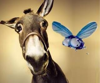La mula e la mosca (Fedro)