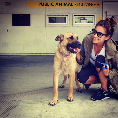 Shay Mitchell's Adopted Dog Angel