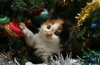 gatti natale