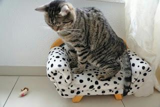 cara menjinakkan kucing yang galak