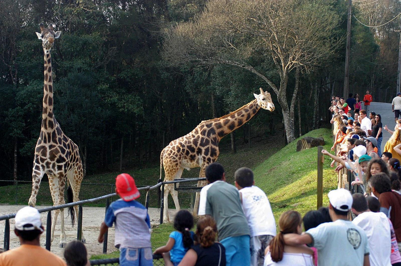 Em Curitiba, visite durante o feriado de festas de fim de ano