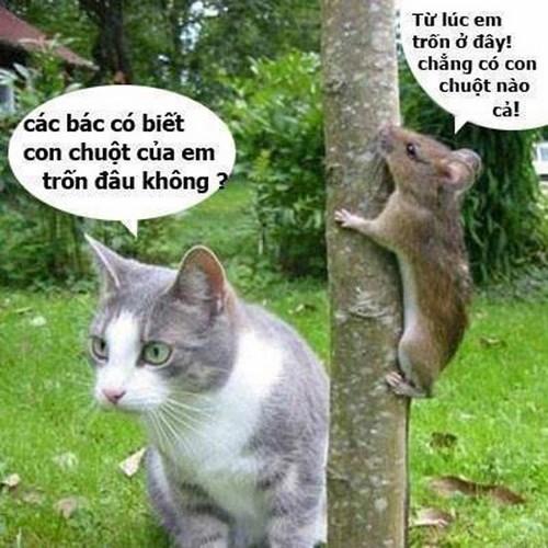 Khi động vật tỏ ra nguy hiểm và hài hước