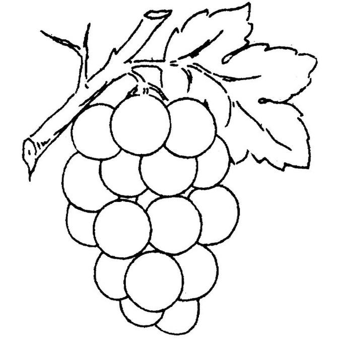 Ahmedatheism Gambar Buah Anggur Untuk Mewarnai