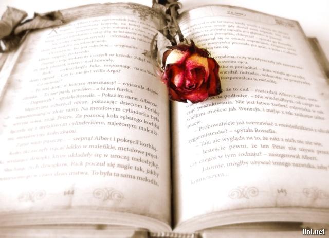 ảnh hoa hồng và sách cũ