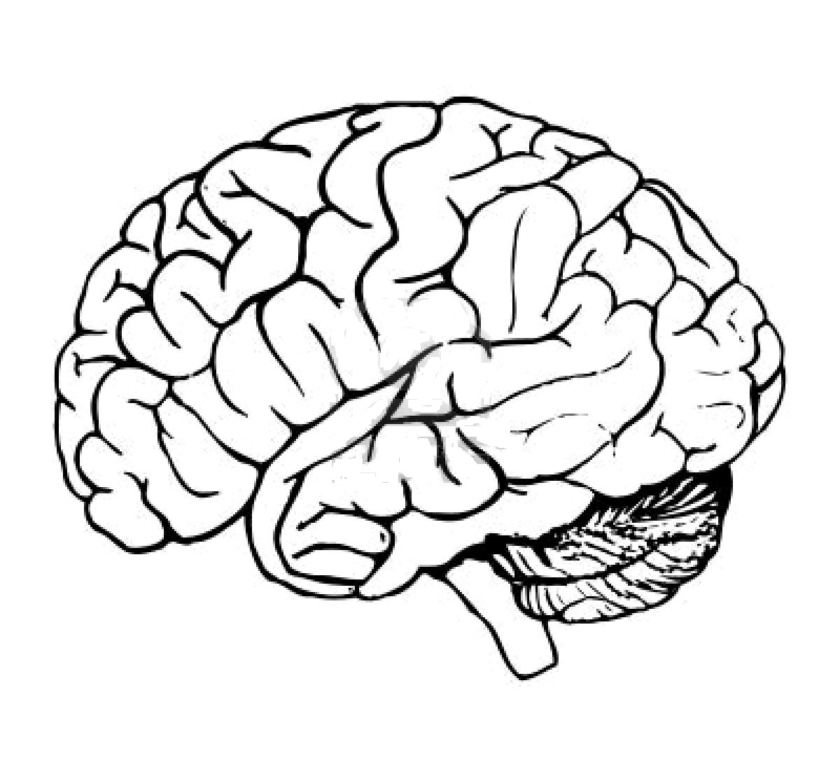Lujo Páginas Para Colorear Del Cerebro Imagen - Dibujos Para ...